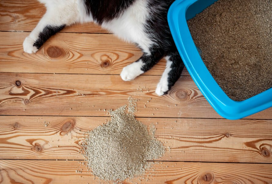 aerial view of cat and litter box