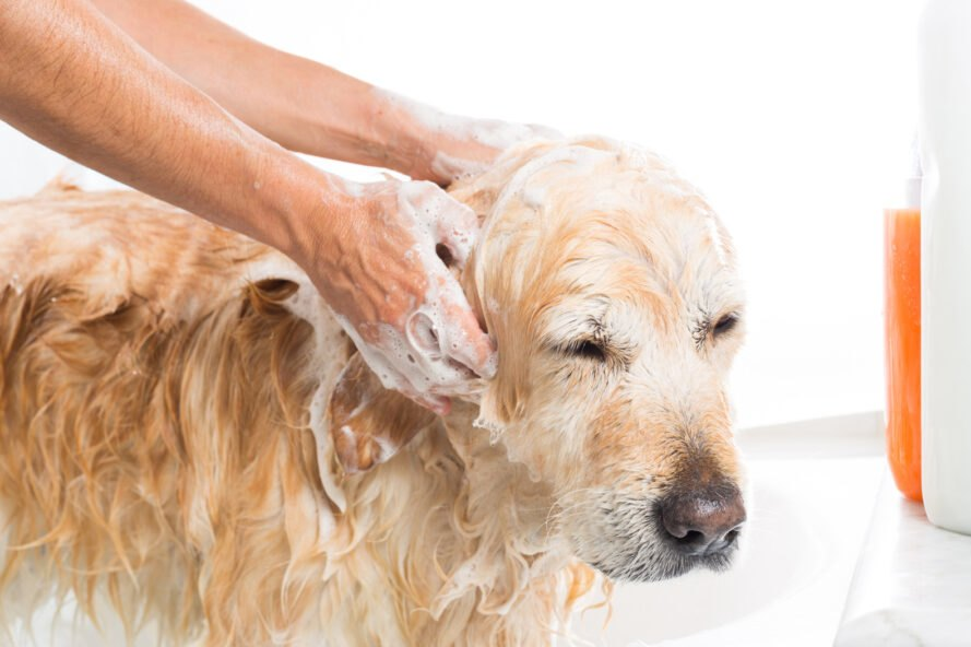 person washing a dog