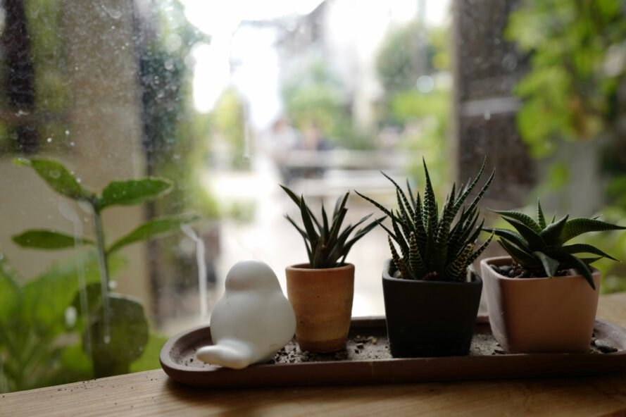 Plants on a window