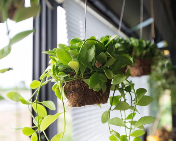 indoor plants hanging from ceiling