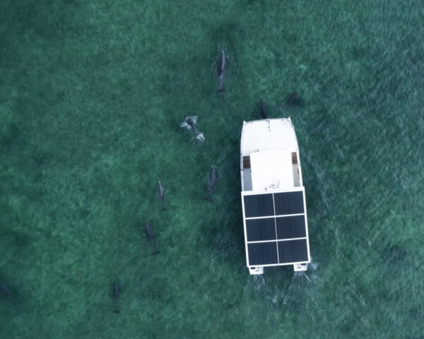 aerial view of solar-powered boat surrounded by dolphins