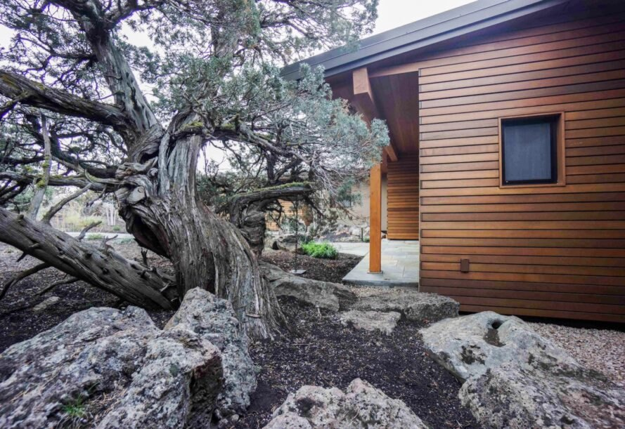juniper trees surrounding the house