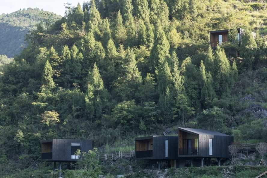 lush trees behind charred black cabins