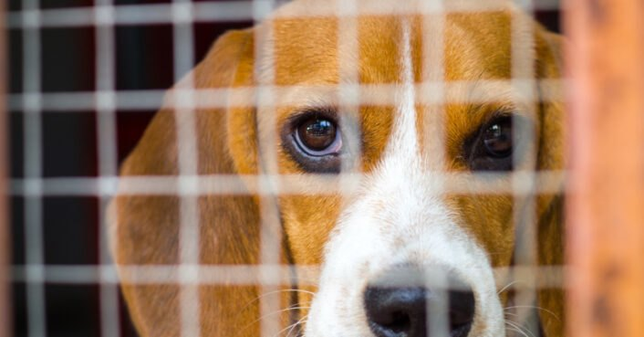 New Humane Society report shows animal testing labs kill thousands