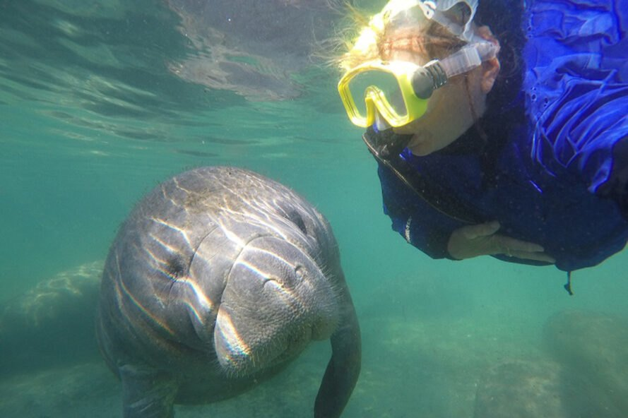 woman takes selfie with a manatee underwater