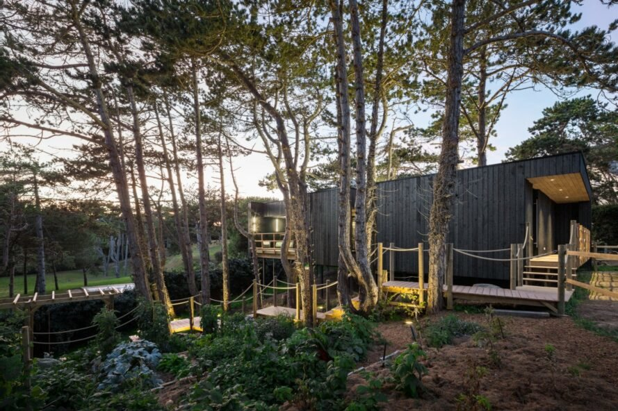 black timber home surrounded by trees