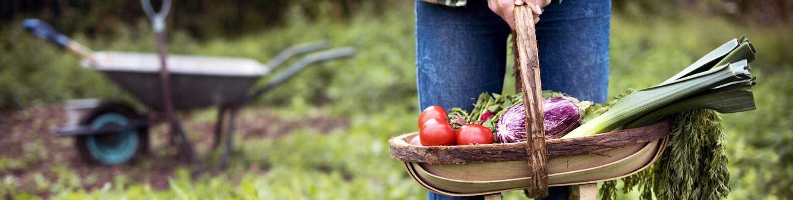person standing and holding basket of fresh veggies in a garden