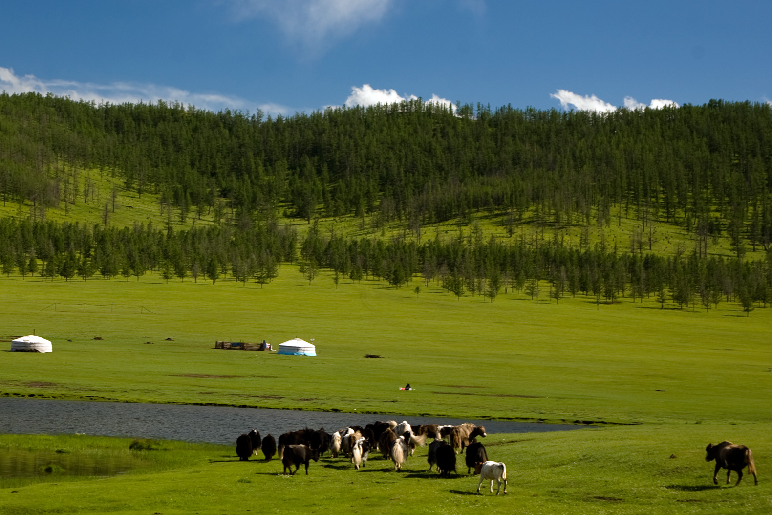 No more neglect: Mongolia says rangelands are a global priority