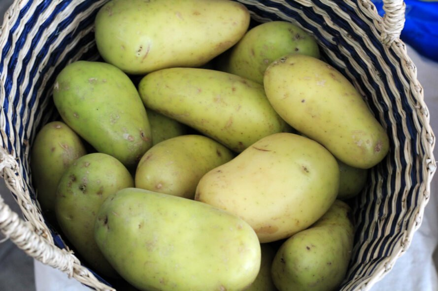 yellow potatoes with slightly green skin in a woven basket