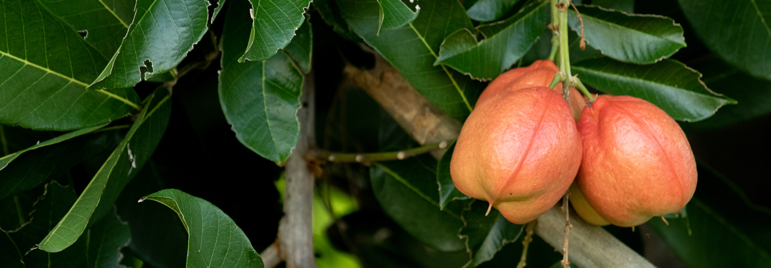 Part Ii More Fruit Of Poisonous Tree >> Are You Accidentally Eating The Toxic Parts Of Fruits And Veggies