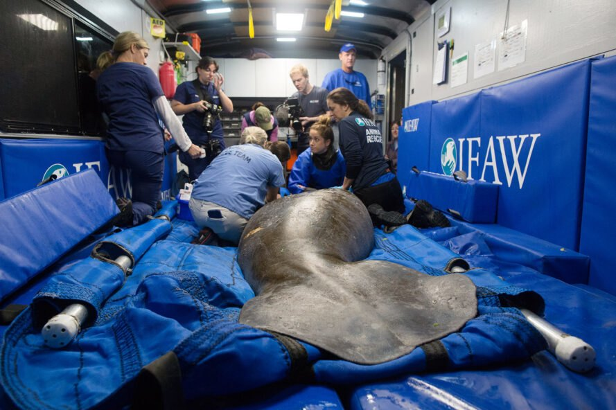 IFAW volunteers working with marine animals