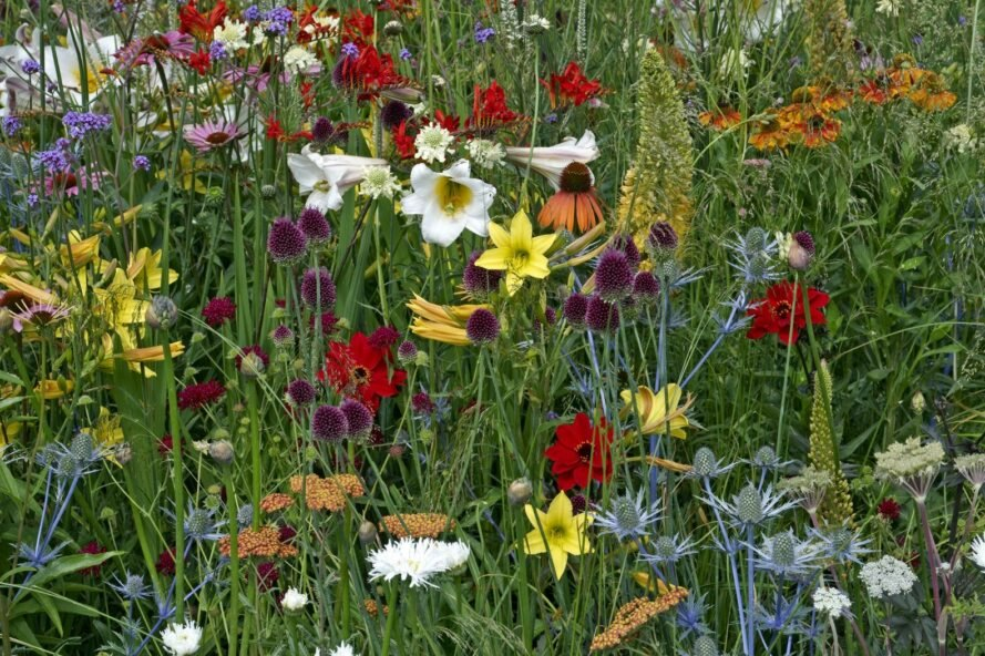 close-up of colorful wildflowers