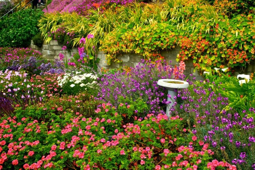 vibrant wildflowers overtaking a yard with a bird bath