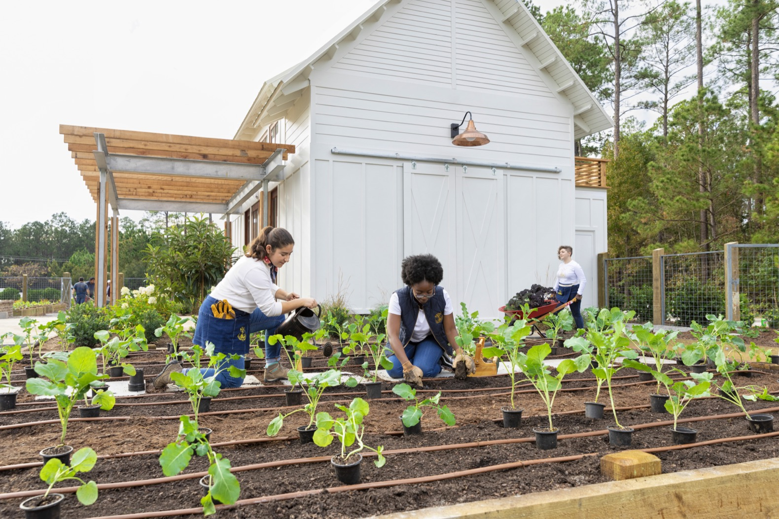 SCAD students fight food insecurity in Georgia with organic farming and beekeeping