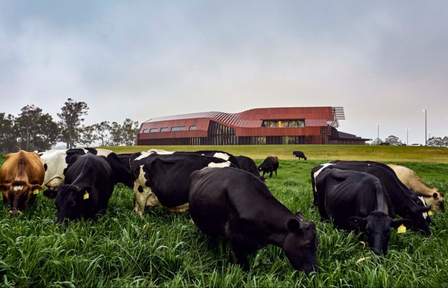 cows grazing in front of large red metal building
