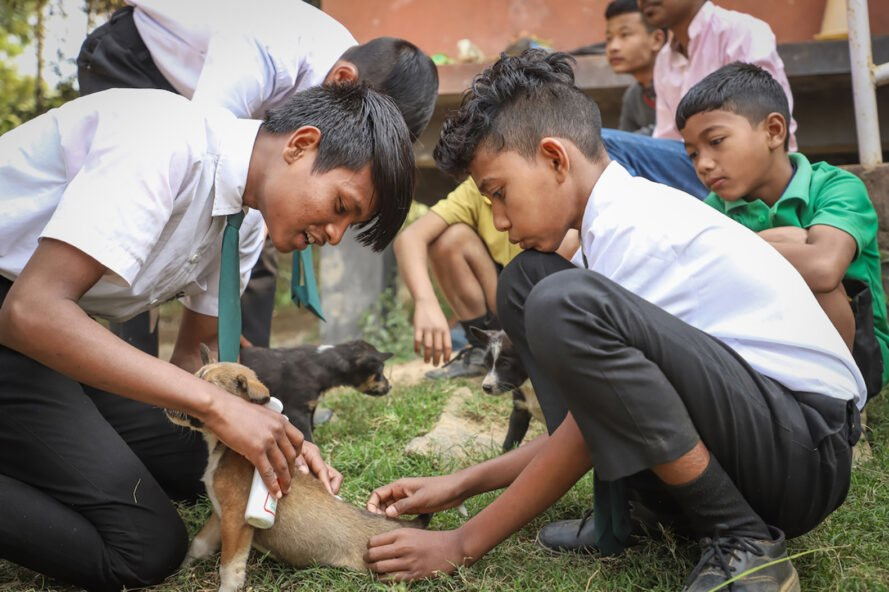 kids taking care of stray dogs