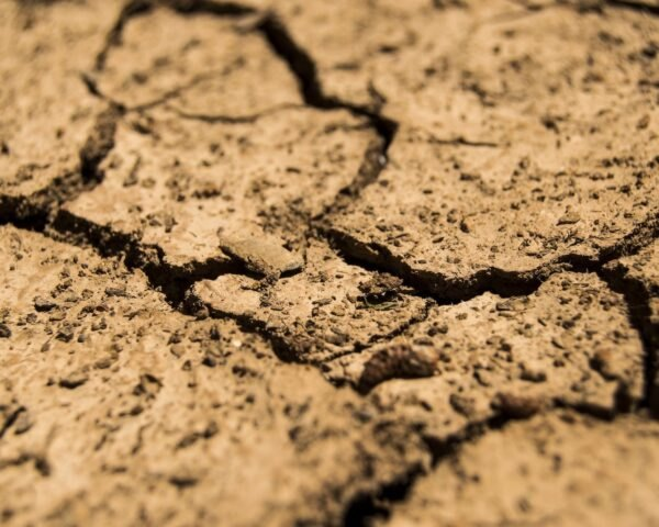 dried, cracked topsoil