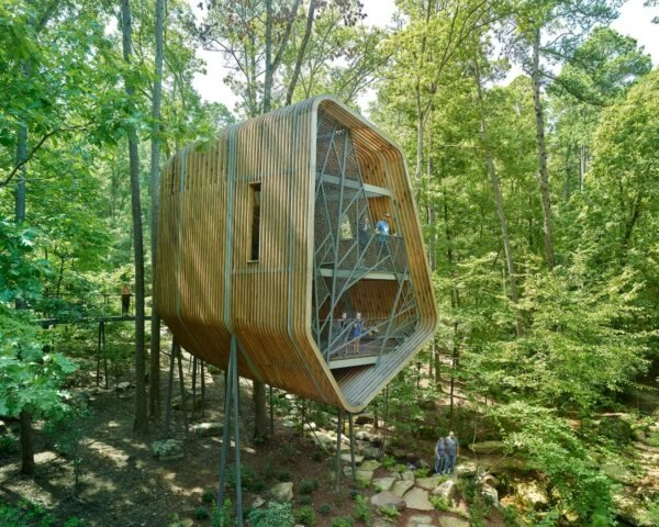 elevated pine treehouse in forest surrounded by greenery and tall trees