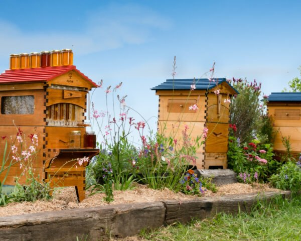 wooden bee hives in a row