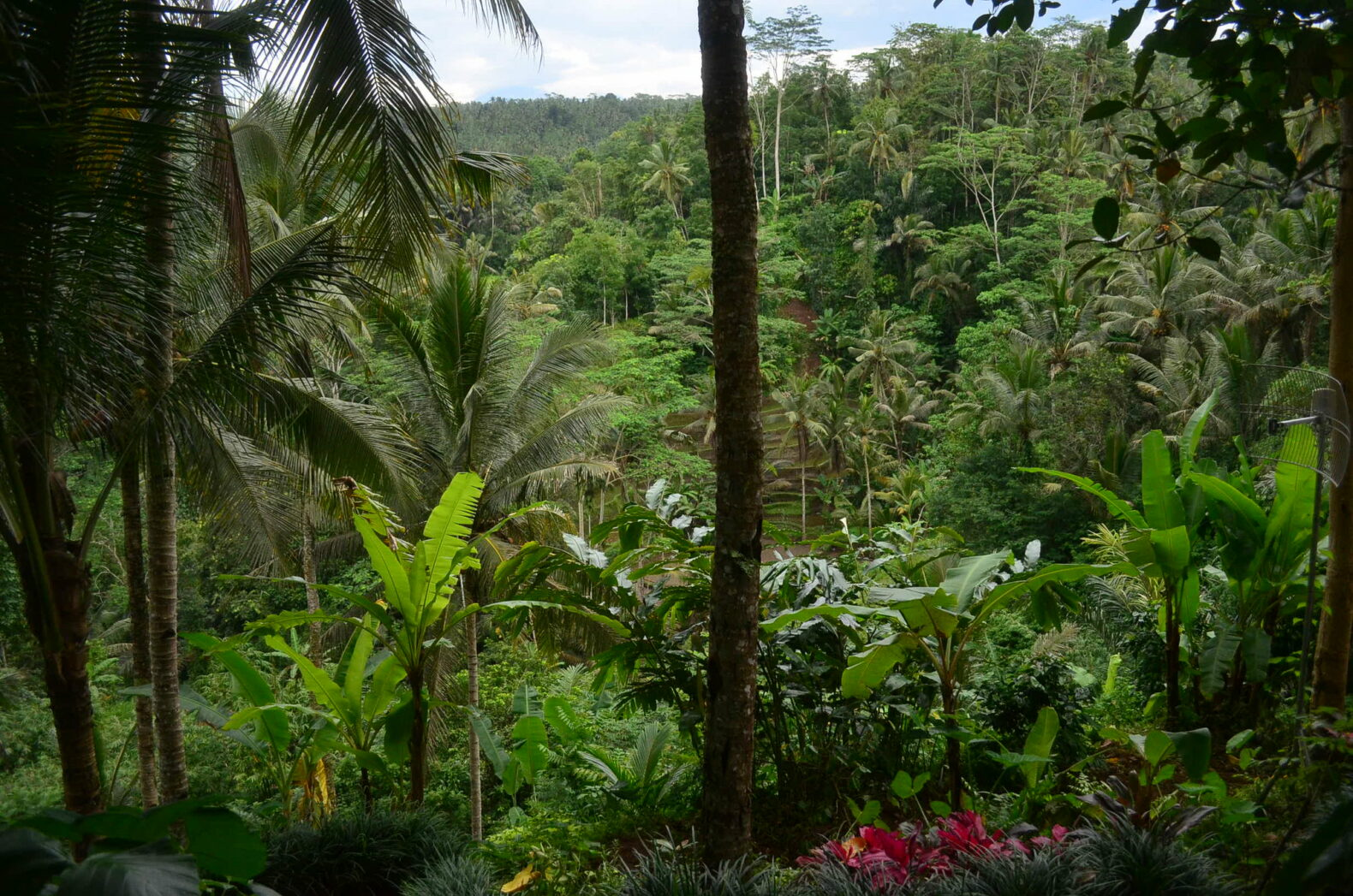 lush tropical forest