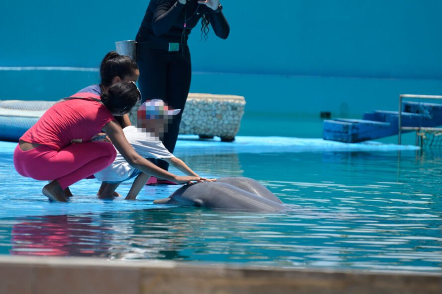 tourists petting dolphins in pool
