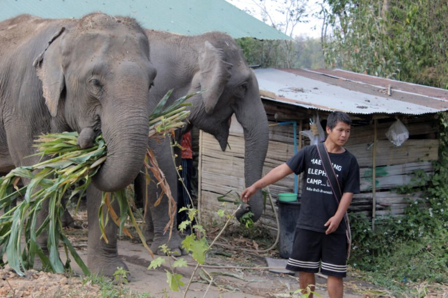 mahout standing next to elephant
