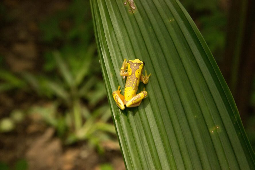 small yellow frog on a leaf