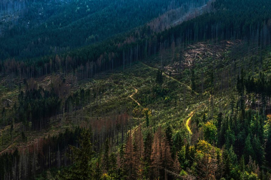 Why reforestation isn't working