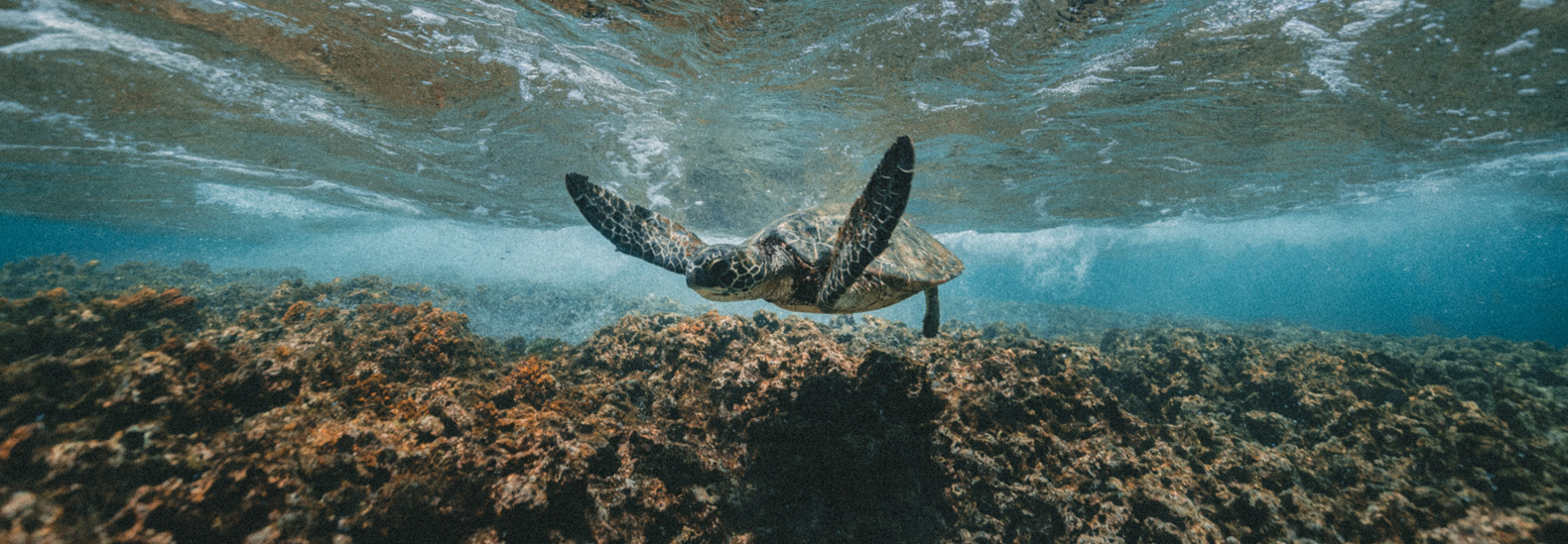 These resorts are working diligently at sea turtle conservation