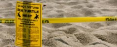 "yellow sign reads, ""Do Not Disturb Sea Turtle Nest"""