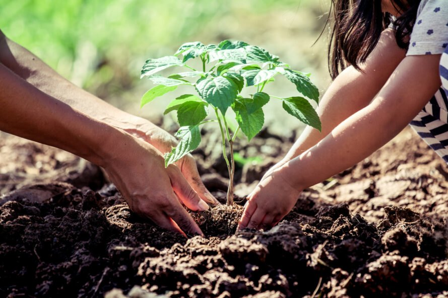 adult and child use their hands to plant a tree in soil