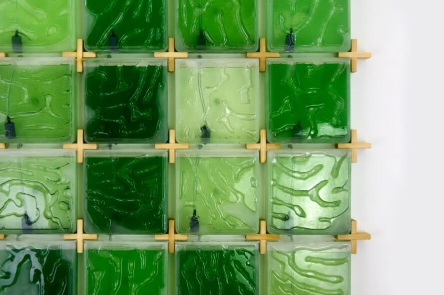close-up of algae farms in varying shades of green