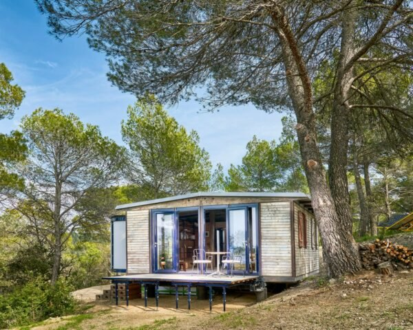 tiny wooden cabin surrounded by pine trees