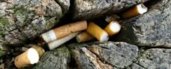cigarette butts lodges into a crack in a tree trunk
