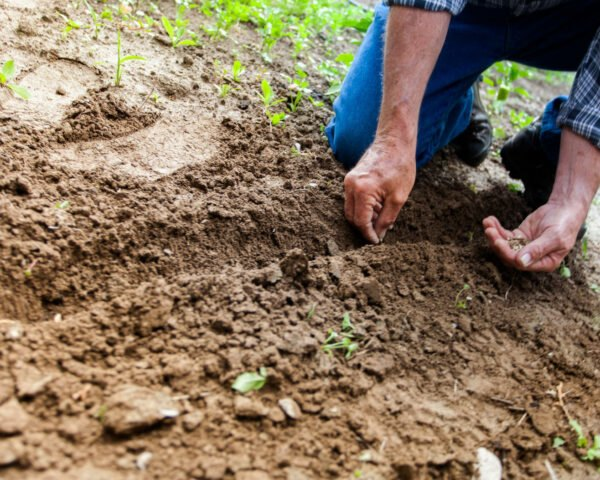 person kneeling down planting seeds in soil
