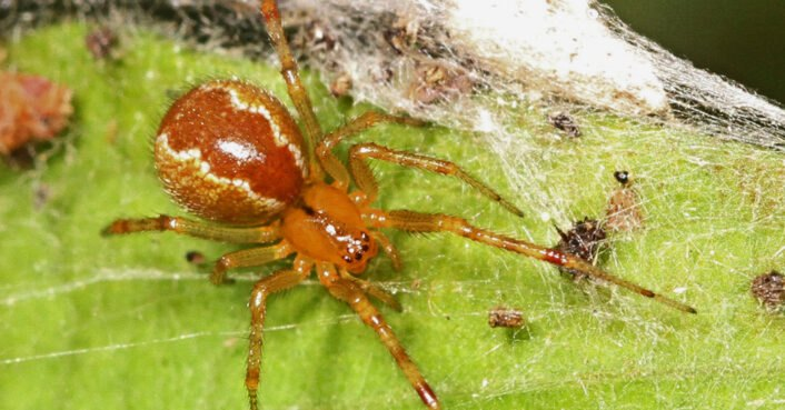 Spiders are becoming aggressive thanks to climate change