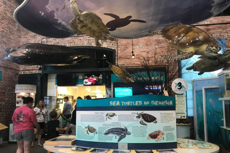 informational center on sea turtles