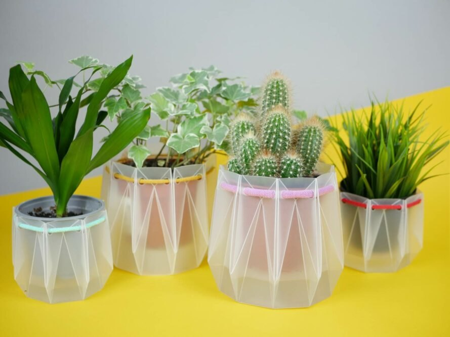 four small plants in semi-transparent pots