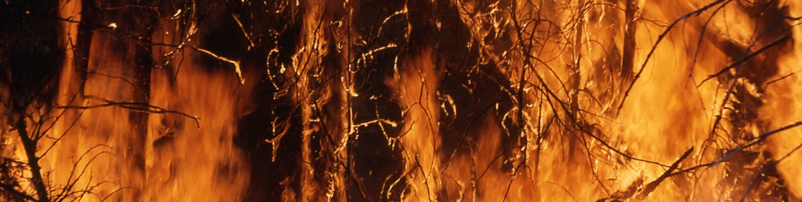 flames engulfing trees in a forest