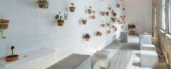white wall covered in potted plants