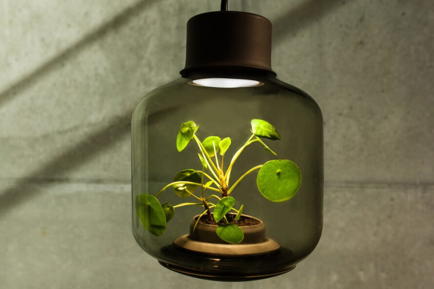 plant inside lamp in a stone room