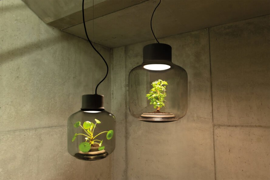 plants inside lamps in a stone room