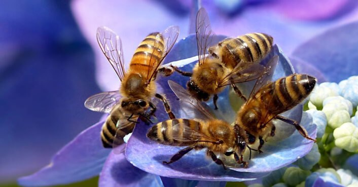 Bee kind to bees, celebrate National Honey Bee Day