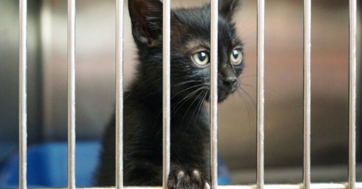 Delaware becomes first 'no-kill' state for animal shelters
