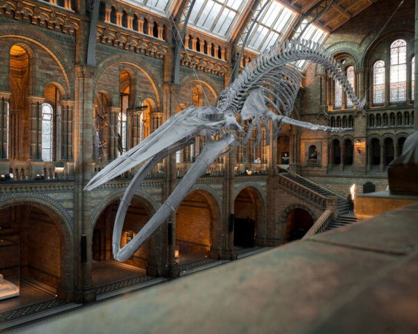 dinosaur skeleton in a museum