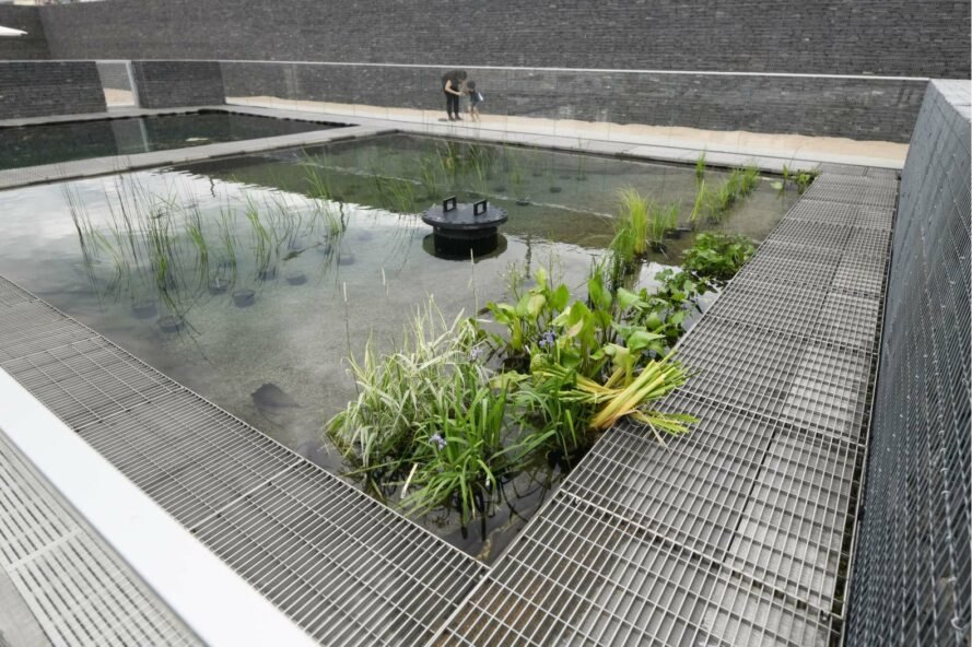 filtering plants in water pond