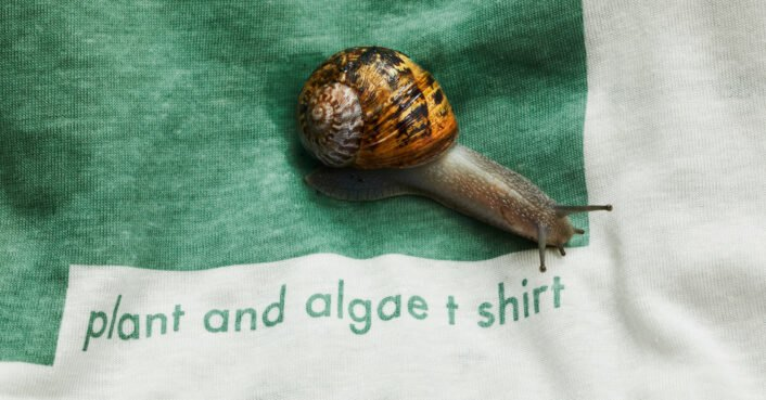 This biodegradable T-shirt is made from trees and algae