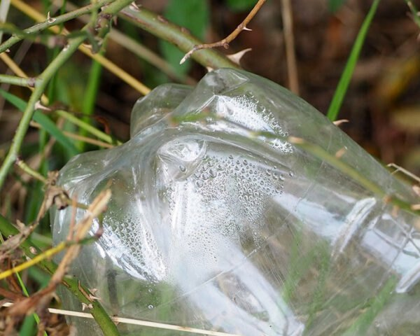 plastic bottle in grass and dirt