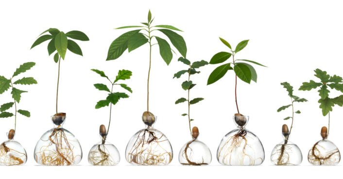 photo of These glass vases let you grow your own avocado tree  no toothpicks required image