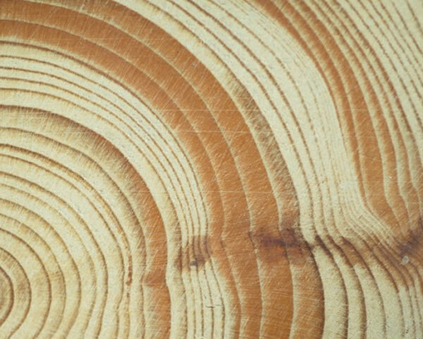 close-up of tree rings on slab of wood
